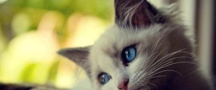 Assurer son chat: une autre façon de lui chouchouter