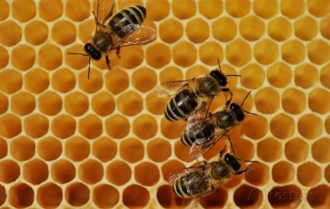 Utiliser la cire en apiculture